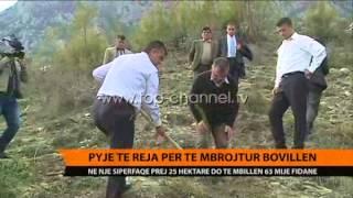 Pyje t reja pr t mbrojtur Bovilln  Top Channel Albania  News  L