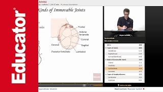 """Articulations"" (Joints) 