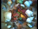 Many Hermit Crabs Eating Together