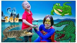 Cá Sấu Đồ Chơi Cắn Tay | Crocodile Toys ❤ BonBon TV ❤