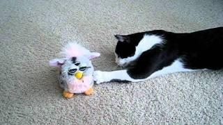 Cat vs Furby