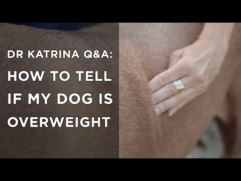 Is my dog overweight? Q&A's with Dr Katrina
