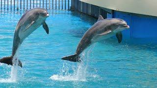 Gato jugando con delfines