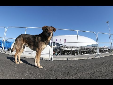Animal Advocates Race to SAVE STRAY DOGS in SOCHI