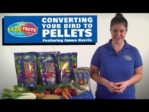 Converting your bird to pellets