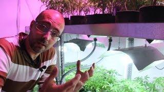 Marihuana Television News 11, Especial Growmed
