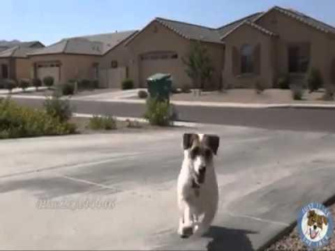 من اروع المقاطع الذي شاهدتها وفاء الكلب لصاحبه .mp4,  المقاطع الذي شاهدتها وفاء الكلب لصاحبه .