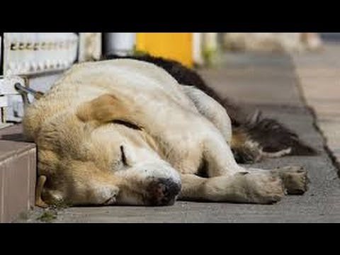 Sochi Olympics 2014 - Dogs Killed
