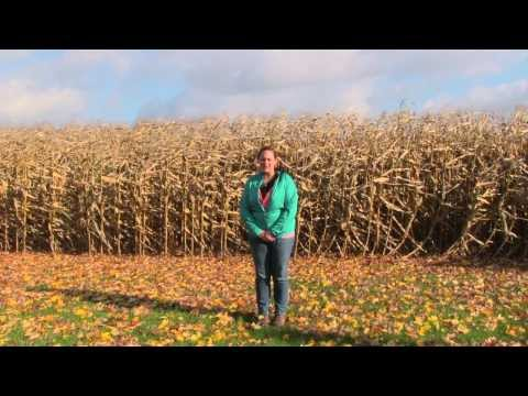 Soil Monitoring and Drought Resistance Strategies for Row Crops