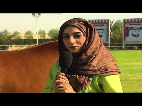 Arabian Horses in the United Arab Emirates -       