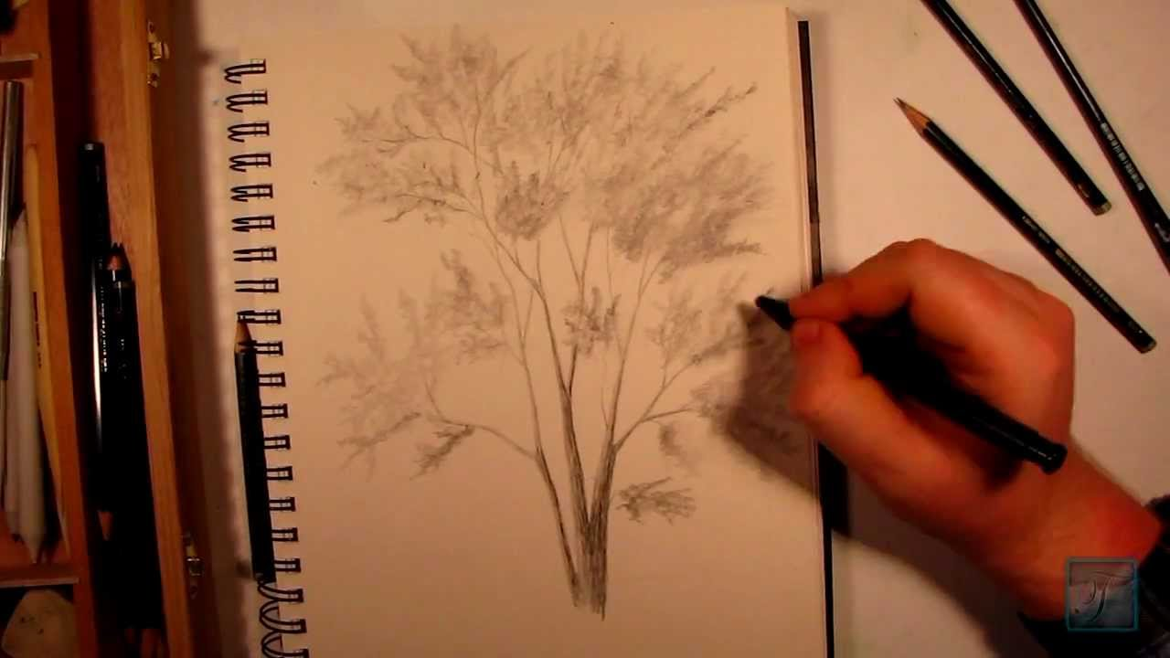 how to draw a realistic tree without leaves
