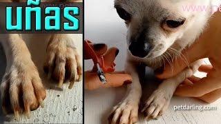 Como cortar las uñas de tu perro