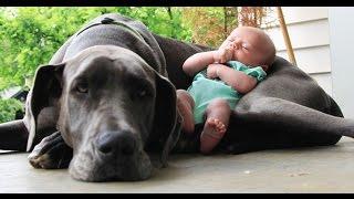 Perros grandes jugando con bebes