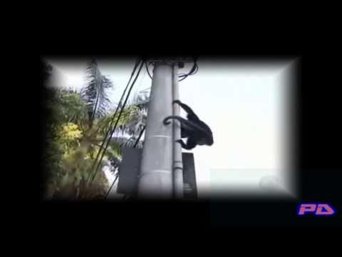 MONTAGEM - BATEU UMA ONDA FORTE (DJ FELIPE SOUZA)