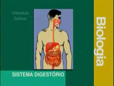 A 03 - Sistema Digestivo - Biologia - Vestibulando Digital