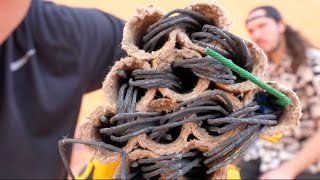 What's inside a Firework?