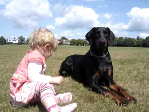 Doberman protects baby toddler at the park. MUST SEE!,