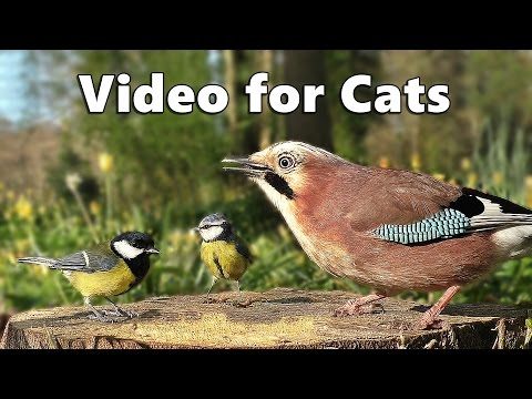Videos for Cats to Watch  - Forest Birds - Vögel - Oiseaux - Vogels - Fåglar - Aves