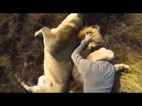 Người đàn ông đùa giỡn với sư tử Hót clip vui hay 2015