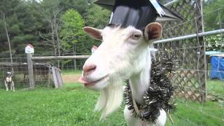 [Graduation Goat] Video