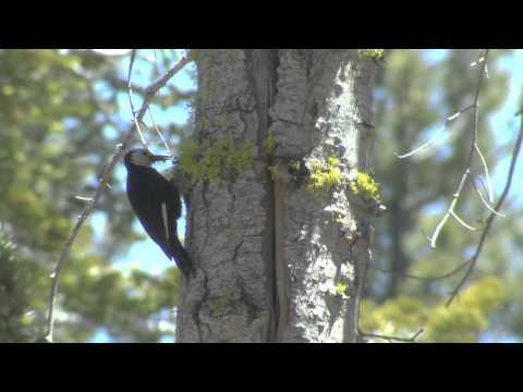 Birding California 2015