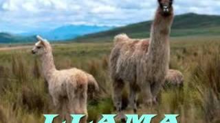 Video Flora Y Fauna .wmv