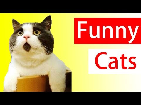 Hilarious Cat Videos    Funny Cat Compilation - Try Not To Laugh