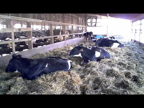The 5 Minute Tour of Hastings Dairy