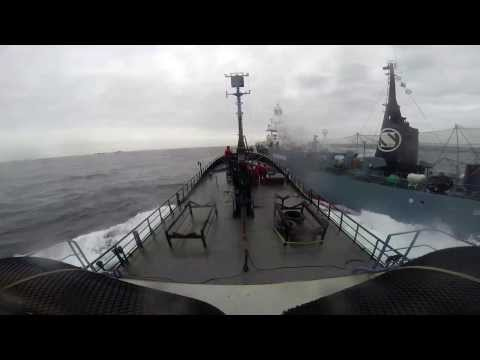 Japanese Whaling Fleet Attacks Sea Shepherd, Hits Bob Barker 2014