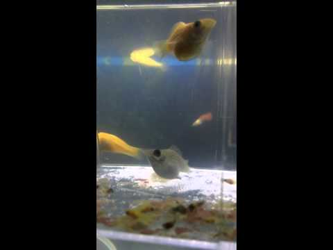 Delevery of fish in small aquarium