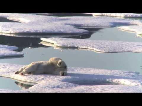 Un gran logro para el Ártico