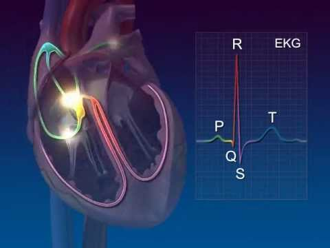 Allahs Mojza ( Miracle ) Heart Conduction System