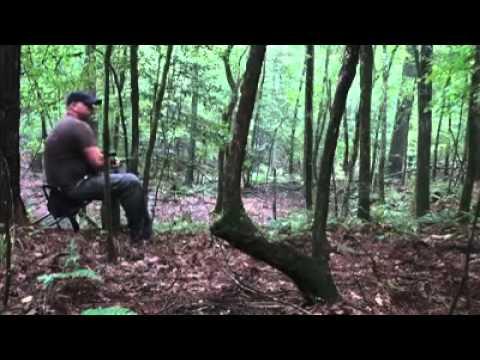 Howling Coyotes - NOT ORIGINAL CONTENT