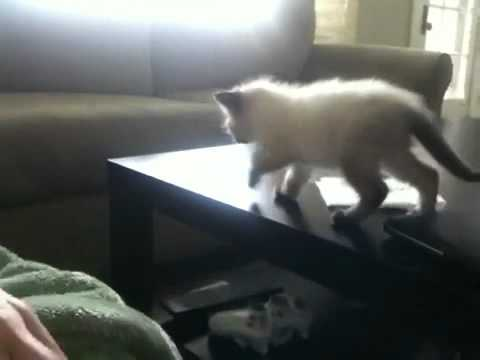 Kitten Jump Fall