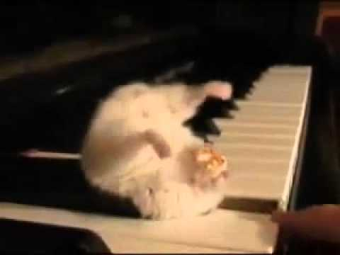 Hamster on a Piano (Eating Popcorn), I am not the original owner and own no rights to this video