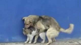 Cachorro Comendo um Gato!!! view on youtube.com tube online.