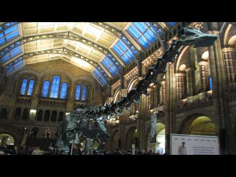 Natural history museum Battersea and Wandsworth London