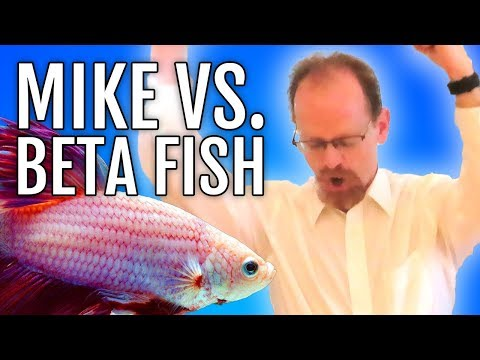 Are You Smarter Than A Beta Fish? 🧠 | HD Find The Funny