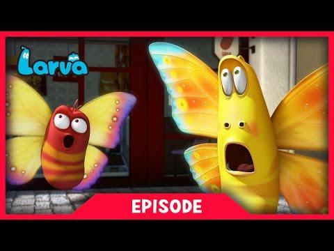 Larva - Divoký svet