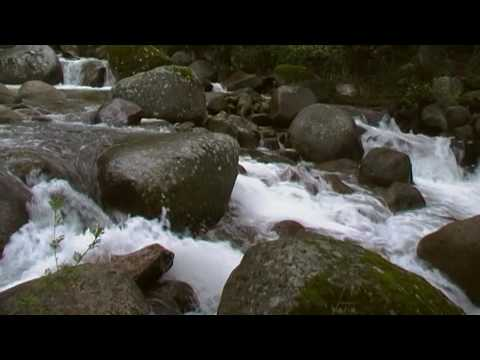 musica relajante de la naturaleza,relaxing music of nature,valle del jerte, cerezo en flor