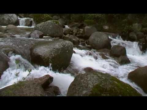 musica relajante de la naturaleza,relaxing music of nature,valle del jerte, cerezo en flor