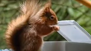 BBC Worldwide: Squirrel Obstacle Course for Peanuts