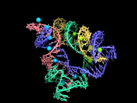 RNA World 3%.avi