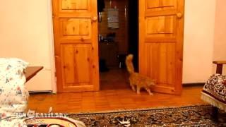 แมวตกใจตามสเต็ปมาริโอ้