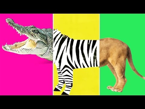 """Baby Fun """"Animal Match Up""""  Learn About Animals Combined Real Animals - Fun Education Baby Games"""