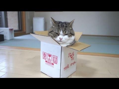可愛貓貓玩子箱!超好笑!