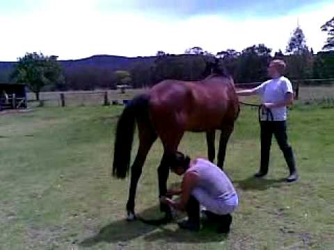 horses mating pics. Horse Mating