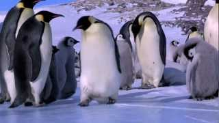 Penguin Fail: Best Bloopers from Penguins Spy in the Huddle