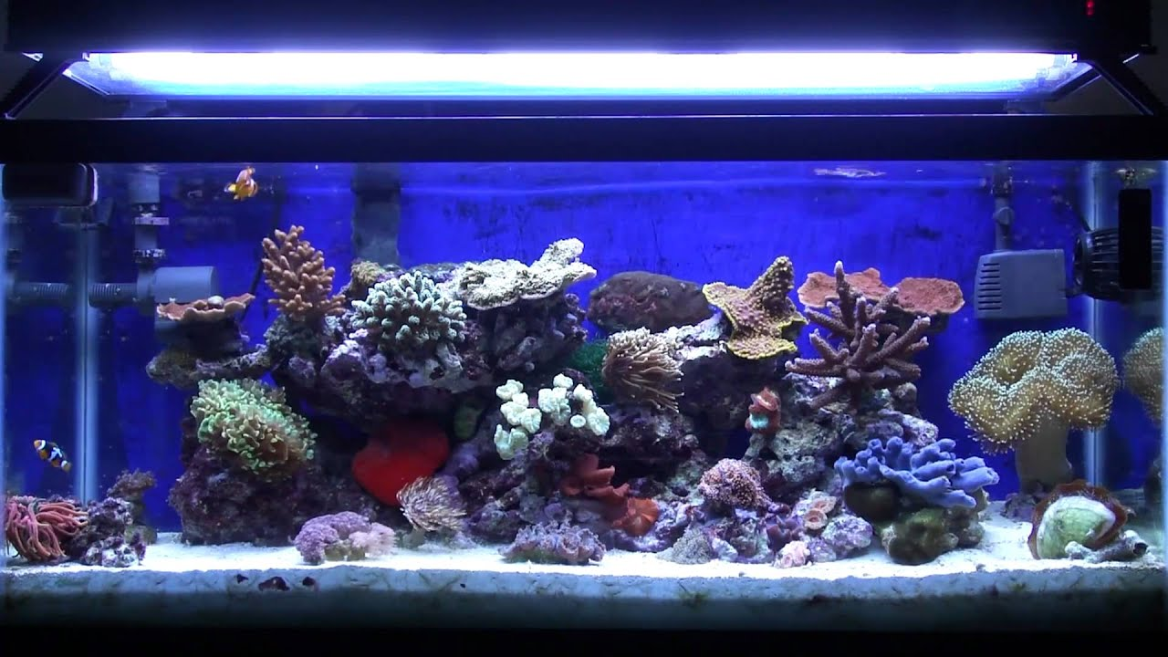 Saltwater aquarium new tank syndrome 2017 fish tank for New fish tank cloudy