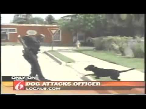 Dog attacks Police Officer Taser Full News Report sad it had the wrong idea